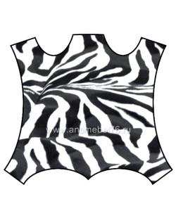 kover_Zebra